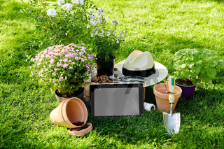 tablet pc, garden tools and flowers at summer