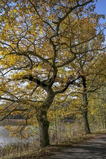 Teichlandschaft mit Herbstbaeume
