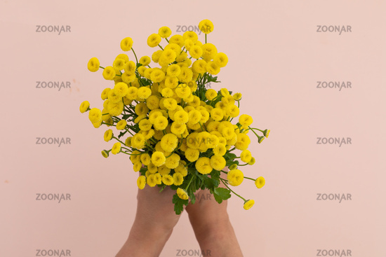 Person holding bunch of yellow flowers on pink background