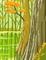 Congaree National Park in Columbia South Carolina United States WPA Poster Art Color