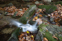 kleiner Bach im Harz