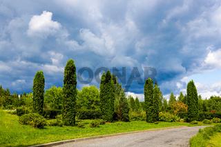 Beautiful park with green thuja, nature photo.