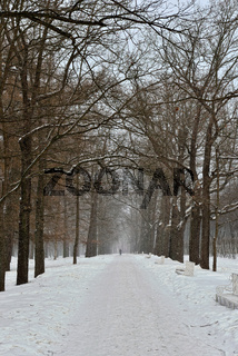 Winter alley in the Pushkin town,