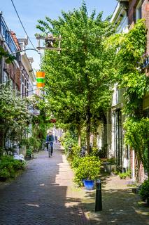 Cozy green street in Haarlem in the Netherlands