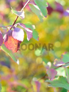 Colorful autumn bokeh background