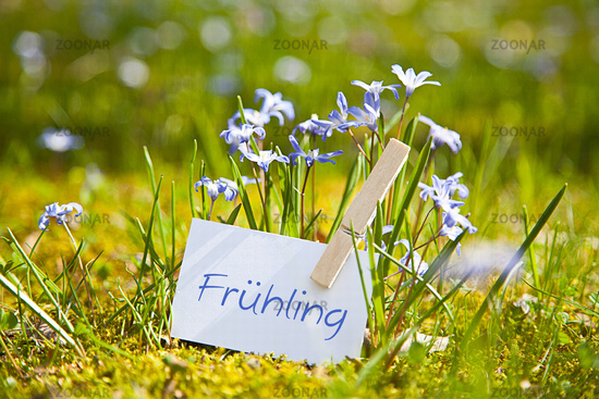"""The word """"Frühling"""" with spring flowers"""