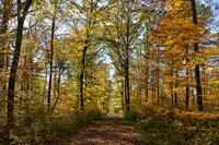 The Southern Black Forest Nature Park 4