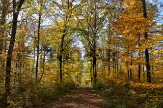 Naturpark Suedschwarzwald 4
