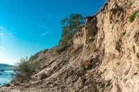 Swallows above the chalk cliffs near Klein Zicker on the baltic sea island Ruegen