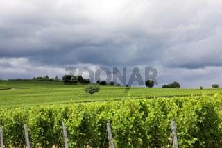 Weinberge in der Pfalz