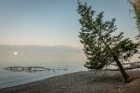 Leaning pine tree, Lake Ohrid, Macedonia