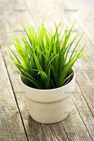 decorative green grass in flower pot