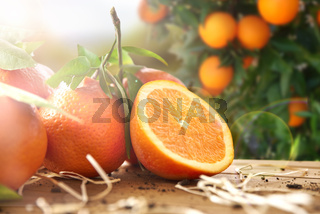 Group of oranges and section and wooden table in field