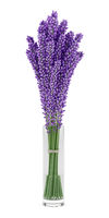purple lupine flowers in glass vase isolated on white background