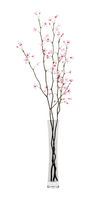 flowering tree twigs in glass vase isolated on white background