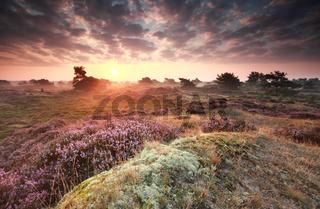 stunning misty sunrise over dunes with heather
