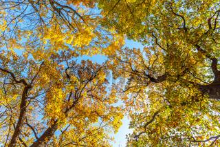 Baeume im Herbst