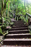 Stone stairs up to the mountain through the jungle
