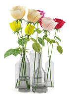 roses in glass vases isolated on white background