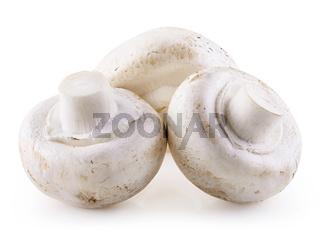 Handful of champignons