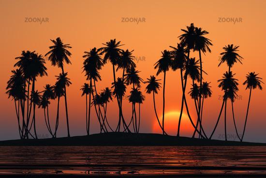 coconut palms island