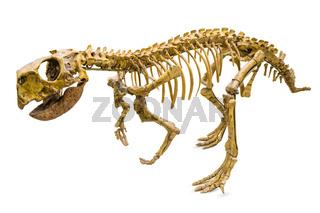 Psittacosaurus Skeleton