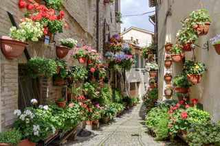 Flowers in side street Spello