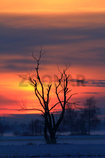 Winterlandschaft bei Sonnenuntergang, Donauried, Bayern
