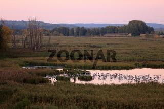 Kraniche, Nationalpark Unteres Odertal