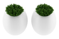two wall plants in pots isolated on white background