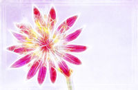 Illustration with a single blooming Astrantia on light background also for cropping.
