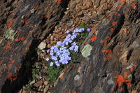 Purple wildflowers blooming in summer in the mountains