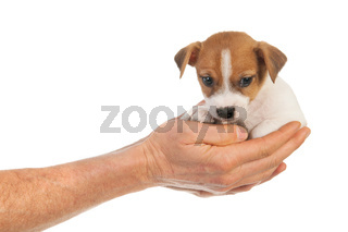 Holding cute puppy in hands