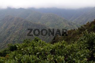 Laurisilva, Lorbeerwald, laurel forest, Azores