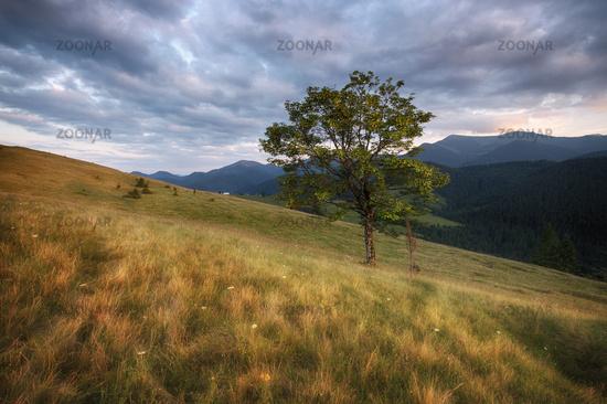 Carpathian mountains rural landscape