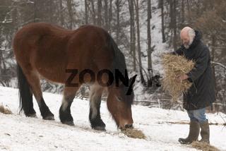 Mann füttert Pferd im Schnee
