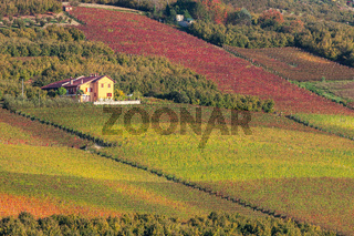Rural house and vineyards in Piedmont, Italy.