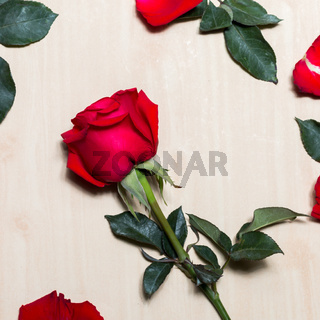 Rose of Valentines Day