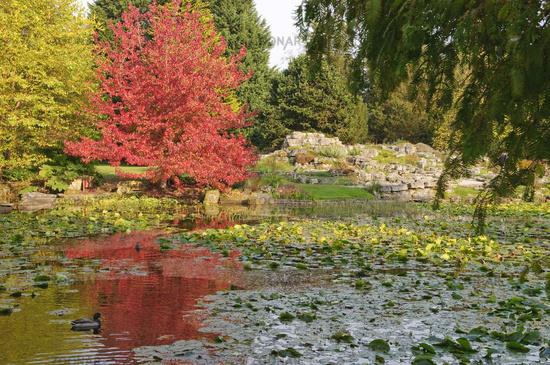 Duck pond in the Cambridge Botanic Garden