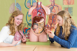 Two female students study human organs in biology lesson