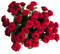 many red roses on black background