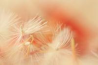 Flower part
