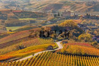 Road through autumnal vineyards.