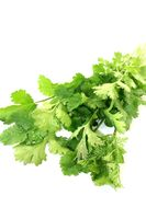 fresh green coriander