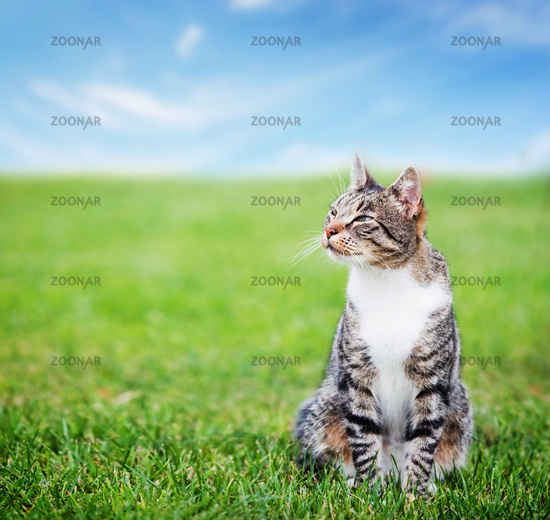 Cute cat sitting on green spring grass on sunny day. Colorful