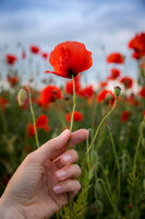 woman holding red poppy