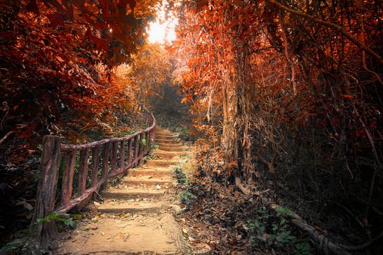 Fantasy autumn forest with path way