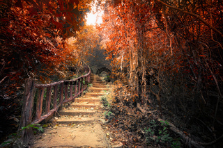 Fantasy autumn forest with path way through dense trees