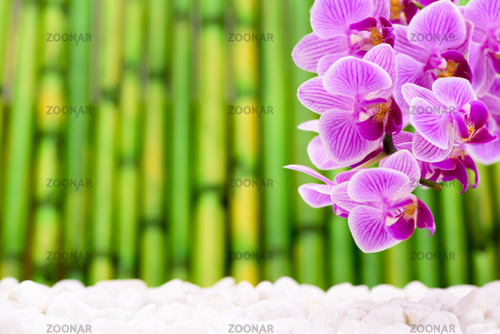 orchid flower with bamboo