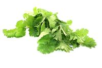 green bunch of coriander